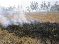 don't burn in fields