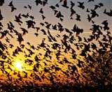 यहां आकर हजारों की संख्या में आत्महत्या करते हैं पक्षी, जानें क्या है हकीकत