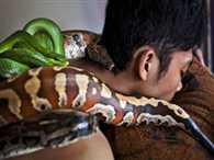 Python Massage Treatment In Jakarta