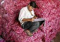 Govt sharply cuts onion MEP to USD 350 a tonne