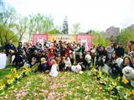 Chinese pet owners host first-ever mass wedding for 21 pairs of dogs