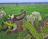 चीन के किसानों ने धान के खेत में की गजब की चित्रकारी, कर दिया धरती का श्रृंगार