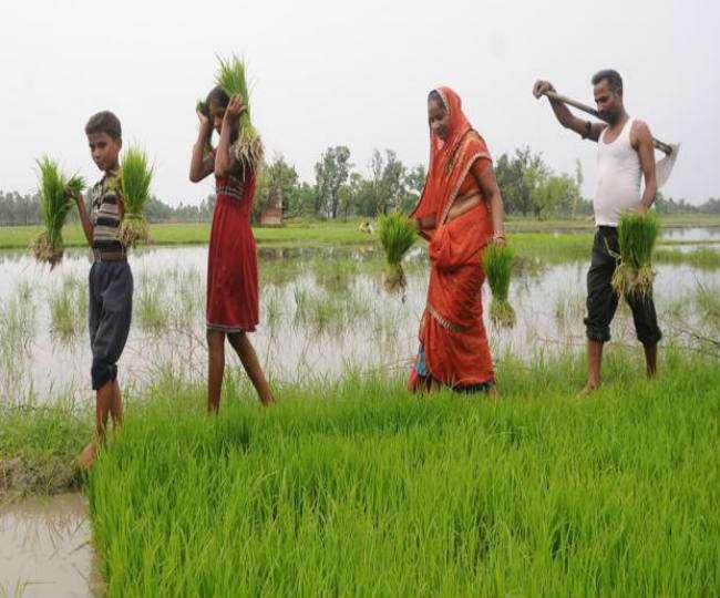 किसानों के विरोध प्रदर्शन के बाद भारत सरकार ने बढ़ाई चावल और कपास की कीमतें
