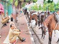Uttar pradesh government spend crores for horses