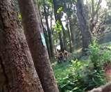 केरल के चिड़ियाघर में शेरनी के बाड़े में कूदा युवक