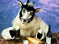 Goats get drunk in dry state