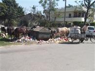 सफाई कर्मियों की नियुक्ति न करने वाली कंपनियों पर गिरेगी गाज