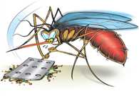 Dengue cases in Delhi cross 200; rise of over 42 pc in 1 week