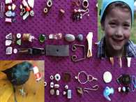 All These Gifts Were Given To An 8 Year Old Girl By Crows