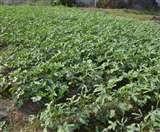 किसानों को डरने की जरूरत नहीं, फसल उगाओ और मौसम की चिंता छोड़ो