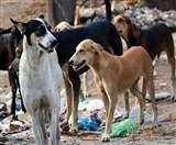 केरल में आवारा कुत्ते के हमले से 50 वर्षीय मछुआरे की मौत