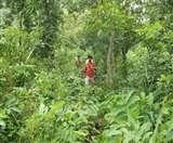 मध्य प्रदेश: तीन दोस्त जंगल में रास्ता भटके, दो की प्यास से मौत