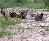 देखना हो जानवरों को नजदीक से बार-बार, जरूर जाएं यूपी के इन पार्कों में एक बार