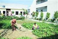 Haryana farmers income from Horticulture will be increased ten times more