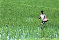 central government hopes good kharif crop