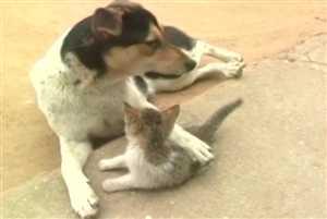 Viral Video: देखिए बिल्ली और कुत्ते की अटूट दोस्ती