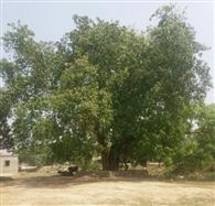 आज जिले में आएगी 84 कोसी परिक्रमा यात्रा