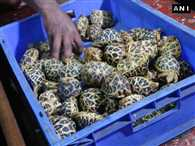 Railway police seized 150 star tortoises at Chennai Central railway station from a passenger