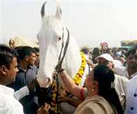 Vasundhara also expresses desire to buy Mare in Rs 72 lakh