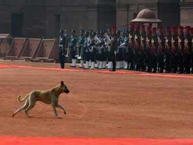 A stray dog sneaks in before the ceremonial reception of President