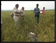 मुरलीगंज में युवक की हत्या, खेत में मिला शव
