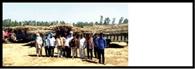 किसानों ने गन्ना उठान न होने पर किया प्रदर्शन