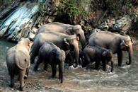 शनि मंदिर में हाथियों को देख हड़कंप