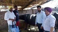 गांव-गांव जाकर टीम ने पालतु पशुओं को लगाए टीके