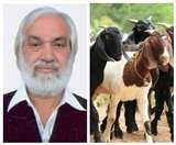 इस सांसद की 23 बकरियां चुरा ले गए चोर