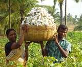 दलित व पिछड़े किसानों को बागवानी से जोड़ेगी सरकार