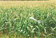 Kharif sowing slow due to delay monsoon