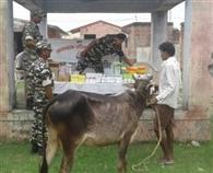शिविर में 140 पशुओं का हुआ स्वास्थ्य परीक्षण