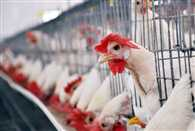 Emphasis on skill development in poultry sector