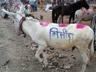 Lalu prasad yadav, Nitish Kumar, Mulayam singh yadav Written on the back of donkeys