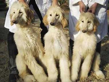 Cloned animals ,China market ,South Korea ,Jagran news,चीन,क्लोन जानवर,दुनिया,बेचेगा