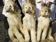 China will create a clone animals they also sell all over the world
