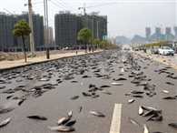The thousands of fish swimming on the road