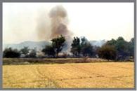 आग से 100 बीघा वन संपदा नष्ट