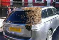 More than 20 thousand bees followed car for two days as queen trapped in car boot
