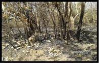 मुबारकपुर वन क्षेत्र में लगी आग, सैकड़ों पेड़ झुलसे