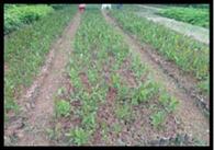 काजू की खेती से बहुरेंगे वन समितियों के दिन
