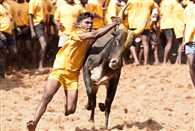 during hearing of Jallikattu case supreme court sharp reaction