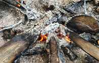 Womens Scorched In While Quench Forest Fire