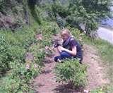 जोशीमठ का गुलाब बिखेर रहा है आस्ट्रेलिया में खुशबू