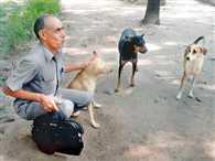 street  dogs found employment