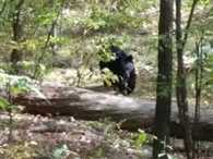 Indian Origin Hiker Snapped Photos of Bear Killed by Him