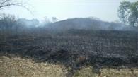 टोंगरी पहाड़ी में लगी आग, जलने से बचा गांव
