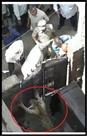 तेंदुए की दहशत : छह घंटे कमरे में कैद रहा परिवार