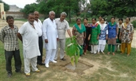 greening campaign