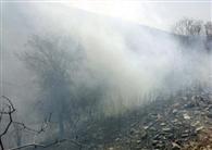 हर्सा के जंगलों में धधकी आग, स्थिति भयावह